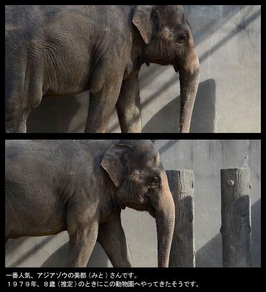 京都市立動物園