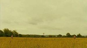 meadow530